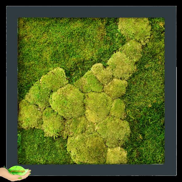 Hier sieht man ein quadratisches Moosbild mit einem Rahmen aus lackiertem MDF in anthrazit mit 50% Flachmoos und 50% dickerem Moos.