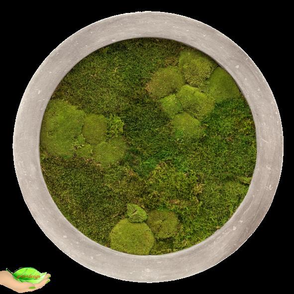 Hier sieht man ein rundes Moosbild mit einem hellen Polystone Rahmen mit 100% Flachmoos.